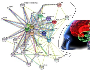 Nasce o primeiro mapa das proteínas do corpo humano!