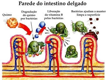 Adaptado de http://www.frequencyrising.com/ColonCleanse.htm