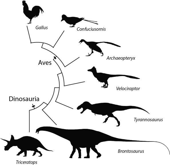 Do ninho ao céu: os filhotes de dinossauros e a evolução dasaves