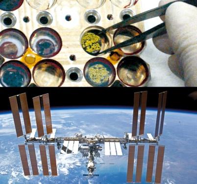 Acima, placas com os liquens e fungos citados no experimento. Abaixo Estação Espacial Internacional.